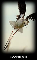Galleria uccelli Simone Tossani con Nikon e Nital